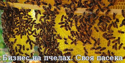 Бизнес на пчелах. Своя пасека