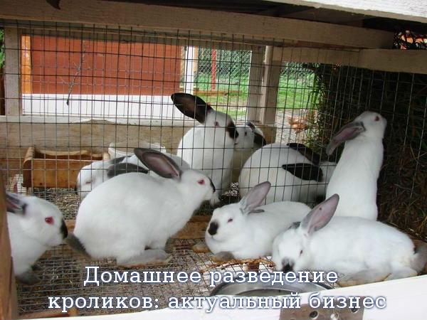 Домашнее разведение кроликов: актуальный бизнес