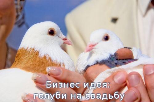 Бизнес идея: голуби на свадьбу
