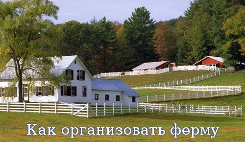 Как организовать ферму