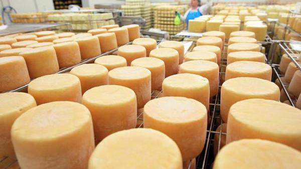 Производство сыра как бизнес
